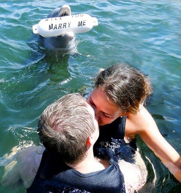 pedida de mano con delfin
