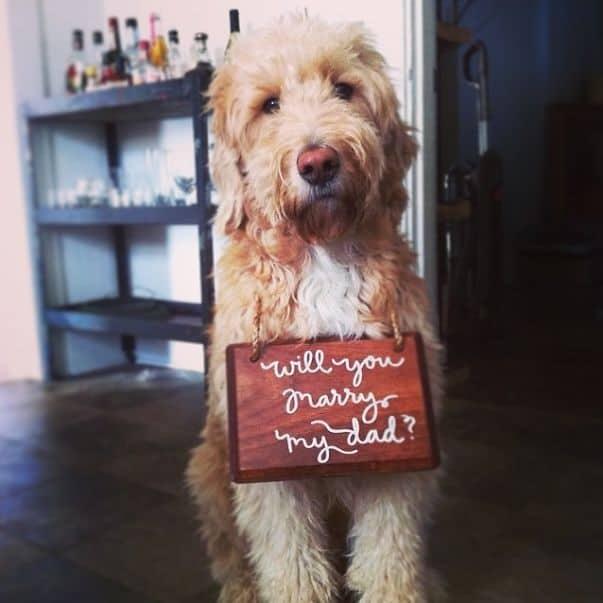 declaración con mascota