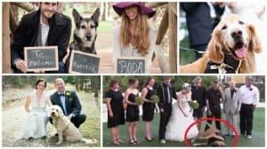 invitaciones boda con perros