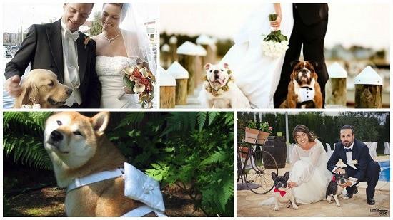 perro anillos en la boda