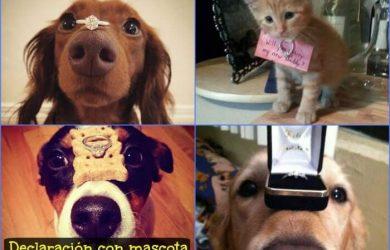como pedir matrimonio con mascota