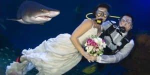 Tu boda entre tiburones
