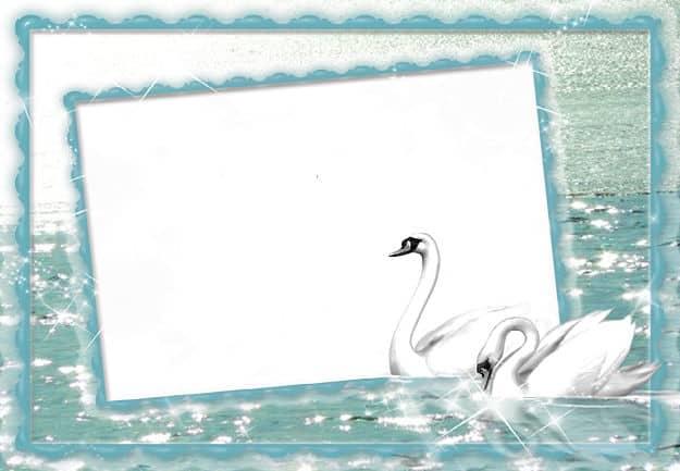 Cisnes nadando