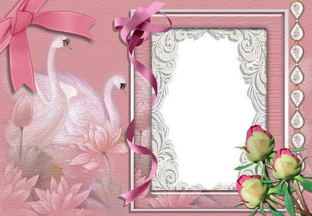 Marco cisnes rosas