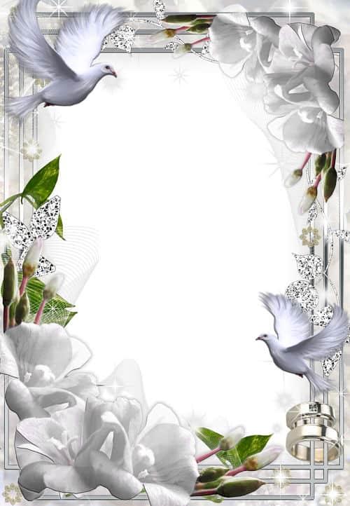 Palomas blancas para fotos