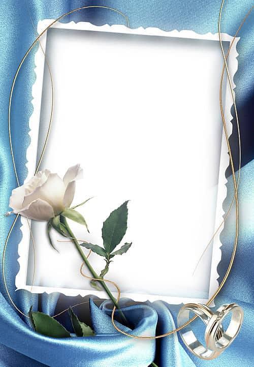 Rosa blanca alianzas de boda
