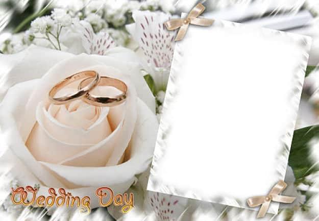 Rosa blanca flores y alianzas de boda