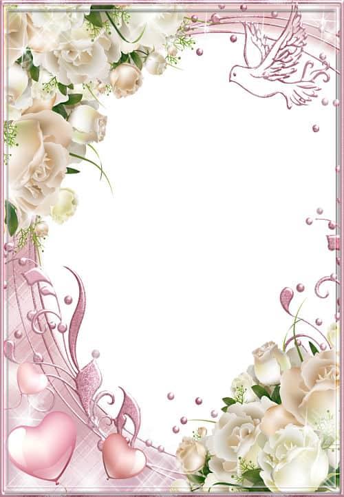 Rosas blancas paloma