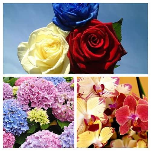 Rosas, orquídeas y hortensias de colores