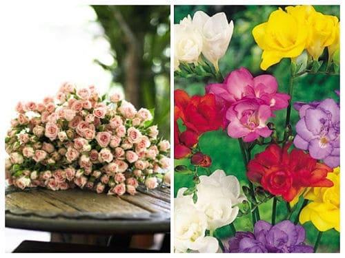 Rosas pequeñas y fresías de colores