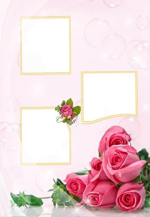 Rosas rosas tres huecos para fotos