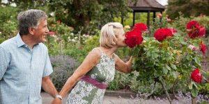 bodas de rosas
