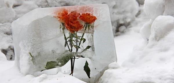 flor en hielo