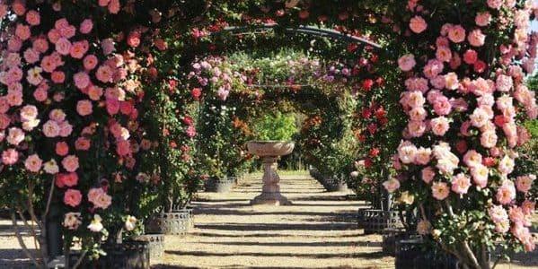 ideas bodas de rosas