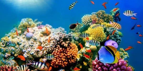 visitar arrecife de coral